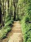 Leschi Trail